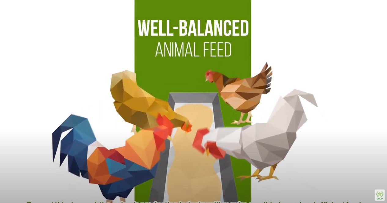 Phosfeed® : the highest digestibility ever measured for a 21 feed phosphate