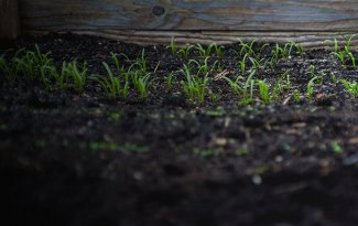 OCP_Customised fertilizers
