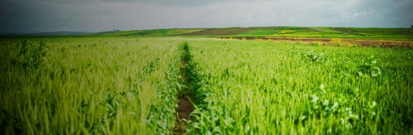 OCP_Agriculture_commitments_Hero